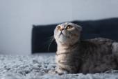 Fotografia adorabile gatto pieghevole seduto in camera da letto e guardando in alto