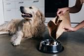 Teilansicht einer Frau, die Golden Retriever Hund Tierfutter in Schale gießt