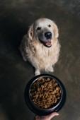 Fotografie Oříznutý pohled ženy držící misku s jídlem v blízkosti roztomilý zlatý pes