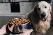 abgeschnittene Ansicht einer Frau, die Schüssel mit Tiernahrung in der Nähe von niedlichem Retriever-Hund hält