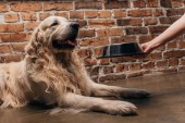 részleges kilátás-ból asszony tárolás ivás-val kisállat étel mellett ravasz Vizsla kutya