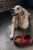 Fotografie niedliche goldene Retriever in der Nähe von Schüssel mit Tierfutter zu Hause liegen