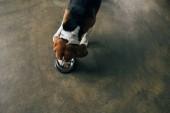 Top-Ansicht von Beagle Hund essen aus Metall-Schüssel in der Küche