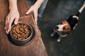 Fotografie abgeschnittene Ansicht einer jungen Frau mit Tiernahrung in Schüssel in der Nähe von entzückendem Beagle-Hund