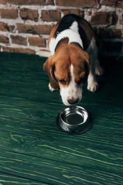 Adorable beagle dog near metal bowl on green floor stock vector