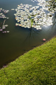 Photo green and fresh grass near pond with water lily leaves