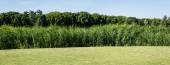 panoráma lövés fák és növények zöld levelek közelében fű Park