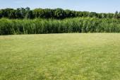 stromy a rostliny se zelenými listy v parku u trávy