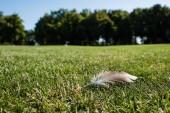 szelektíven összpontosít toll zöld fű parkban nyáron
