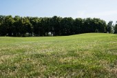 Fotografie selective focus of trees near green grass in park in summertime