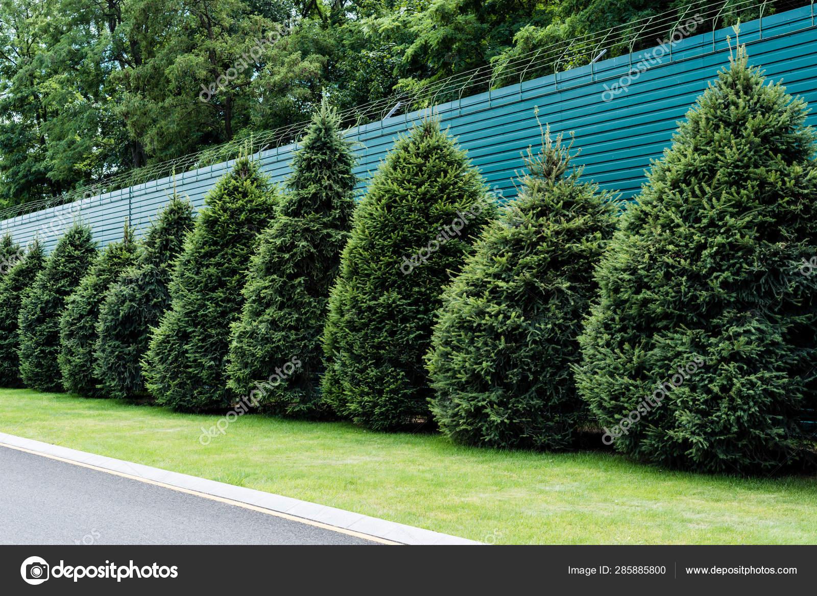Staccionata Bianca In Legno foto stock steccato, immagini steccato royalty-free