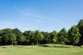 stromy se zelenými listy na zelené trávě proti modrému nebi v parku