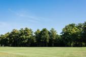 selektivní zaměření stromů se zelenými listy na trávě proti modrému nebi v parku