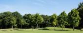 panoramatický záběr stromů se zelenými listy na zelené trávě proti modrému nebi v parku