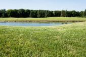selektivní zaměření zelené trávy blízko rybníka v parku v létě