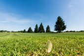 selective focus of leaf on green and fresh grass in park