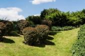zöld bokrok közelében növények és fák nyáron