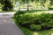 chodník u zelených keřů a stromů s listy v létě