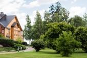 Fotografie zelené keře, stromy a borovice poblíž domu a chodníky v létě