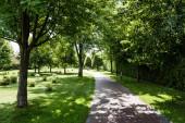 stíny na zelené trávě s keři a stromy nedaleko stezky v parku