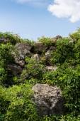 grüne frische Blätter auf Pflanzen in der Nähe von Steinen gegen blauen Himmel