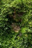 Fotografie green fresh leaves on plant near stones in summertime