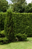 green conifer plants near pines on green fresh grass
