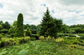 Fotografie green pine trees and plants on grass against sky with clouds
