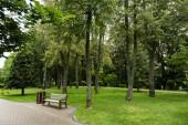 fa pad közelében út és a fák a friss fű