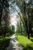 napfény a gyalogjáróban a fák árnyékában a parkban