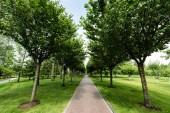 napfény az ösvényen a fák árnyékában a nyári parkban