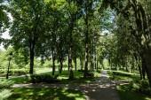 sluneční svit na cestě se stíny stromů a keři v parku