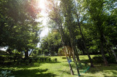 sunshine on green grass, trees and bushes in park