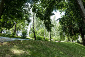 Fotografie low angle view of green grass with trees and plants in park