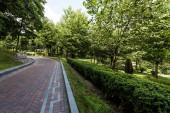 Fotografie dlažby na pěšině u zelených stromů a keřů v parku