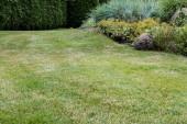 selektivní zaměření čerstvé zelené trávy v blízkosti malých keřů