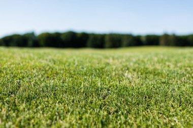 Selective focus of green fresh grass in summertime stock vector