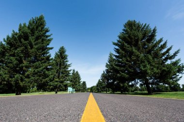 low angle view of road with yellow line near green trees with leaves in summer