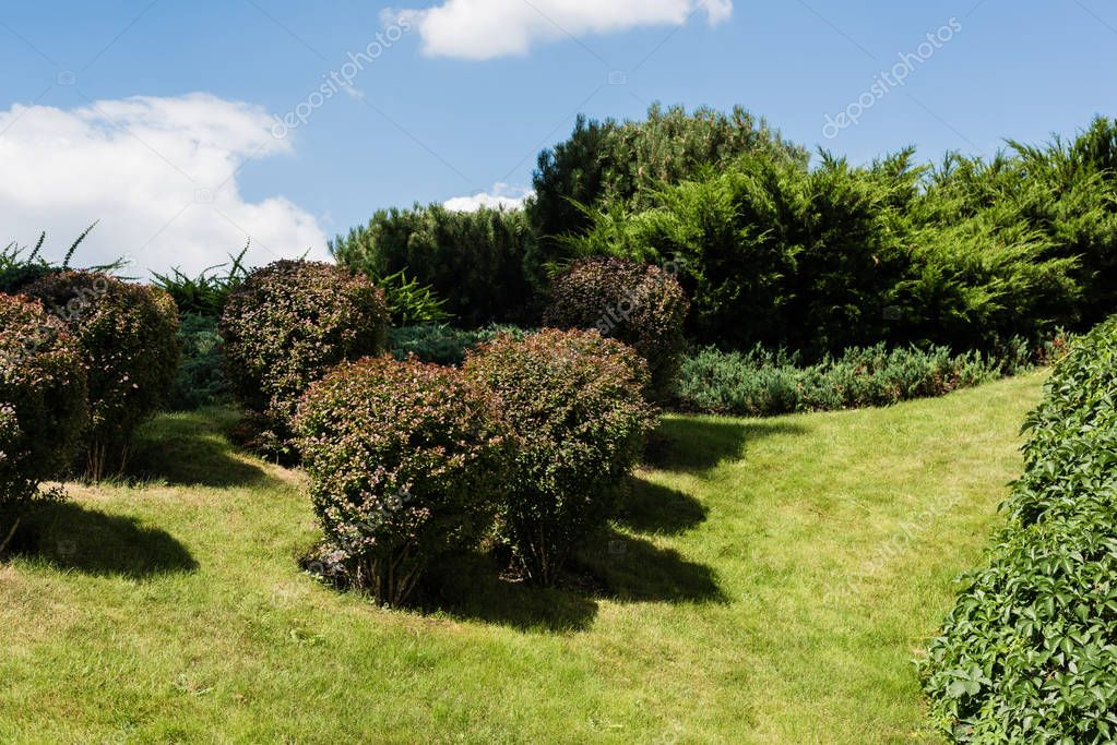 Green bushes near plants and trees in summertime