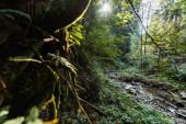 az erdők folyója közelében lévő ágak szelektív fókuszának