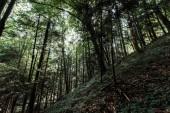 Fotografia vista ad angolo basso degli alberi con foglie verdi nei boschi