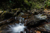 water flowing on wet rocks near green leaves in woods