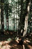 napsütés a fák zöld és friss levelei erdőben