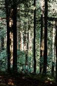 árnyékok a fák zöld levelei az erdőben