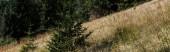 colpo panoramico di pini sempreverdi vicino campo dorzo