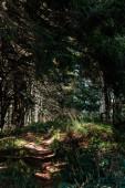Schatten auf dem Weg in der Nähe von grünen Bäumen im Wald