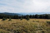 Fotografie Zlatý trávník v horách se zelenými stromy proti obloze
