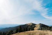 Wiese in den Bergen mit grünen Tannen gegen den Himmel
