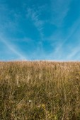 Photo golden field with barley against blue sky with clouds