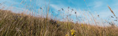 Fotografie panoramic shot of yellow blooming wildflowers in field against sky